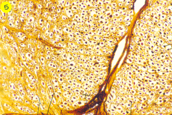 nervous tissue and system