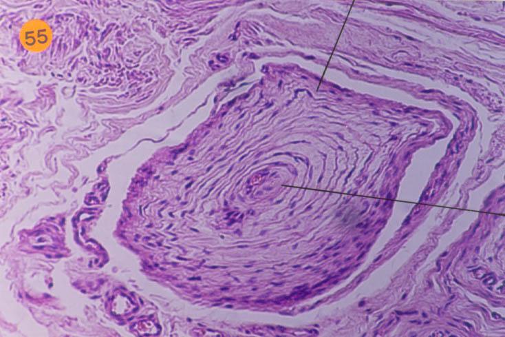 skin, Human Body